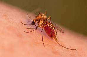 Summer's tiny blood-sucking curse: the mosquito